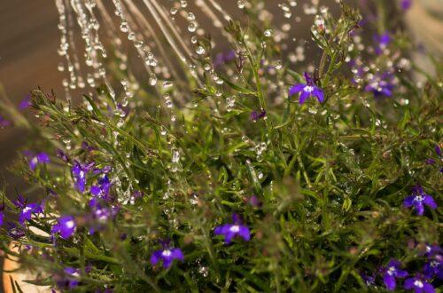 impact of indoor gardening on your mental health